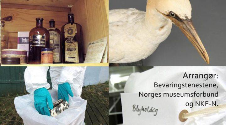 Bilder av farlige stoffer, utstopet fugl, verneutstyr og merkelapp.