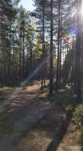 Litt mystisk skog.